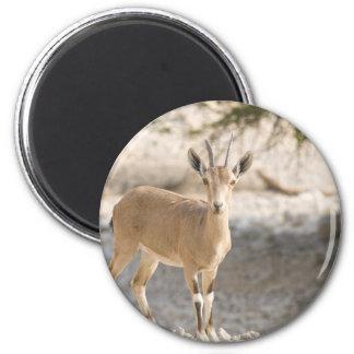 Ibex - Yael Refrigerator Magnet