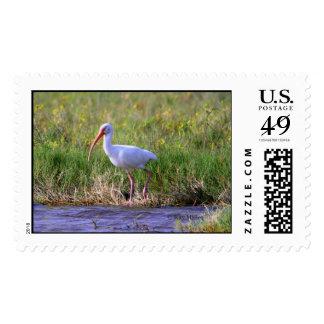 Ibis-1,  Kay Miller Stamp