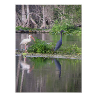 Ibis and Heron Poster