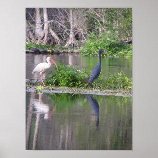 Ibis and Heron Print