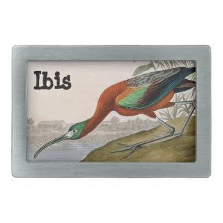 Ibis Belt Buckle