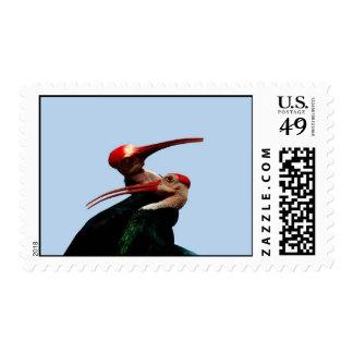 Ibis Bird Forever Love Postage Stamp