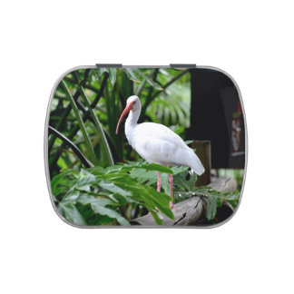 ibis bird standing on fence plants feeder jelly belly candy tins