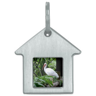 ibis bird standing on fence plants feeder pet name tag