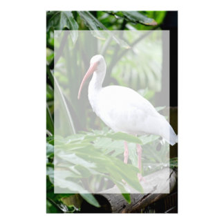 ibis bird standing on fence plants feeder stationery