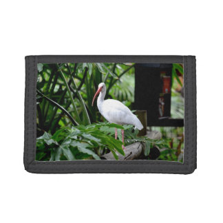 ibis bird standing on fence plants feeder trifold wallets