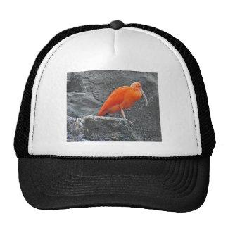 Ibis Bird Trucker Hat