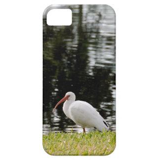 Ibis blanco adulto que muestra extremidades de ala iPhone 5 Case-Mate carcasas