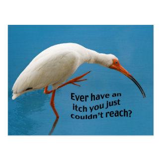Ibis blanco con una postal del picor