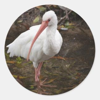 Ibis blanco en el agua eying la cámara pegatinas redondas