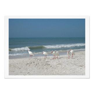 Ibis blanco en la playa de Sandy rosada Cojinete
