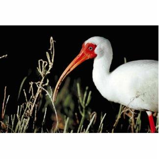 Ibis blanco esculturas fotograficas