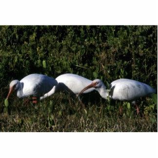 Ibis blanco esculturas fotográficas