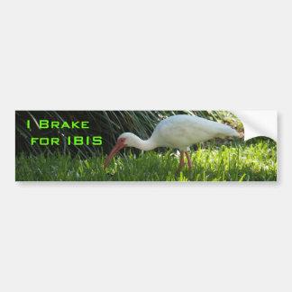 Ibis en el parque etiqueta de parachoque