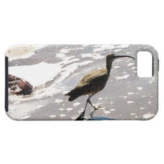 Ibis en la playa iPhone 5 fundas