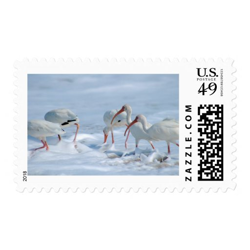 """Ibis en nieve """" sellos"""