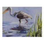 Ibis en pantano herboso postales