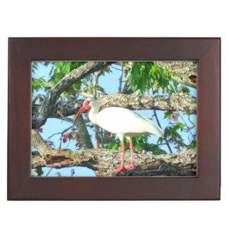 Ibis in Goldenrain Memory Box