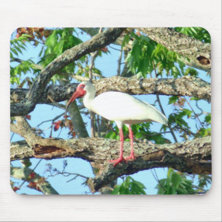Ibis in Goldenrain Mouse Pad