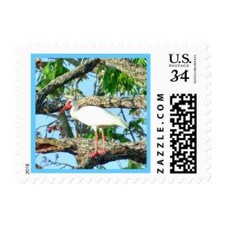 Ibis in Goldenrain Postage Stamp