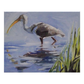 Ibis in Grassy Marsh Poster