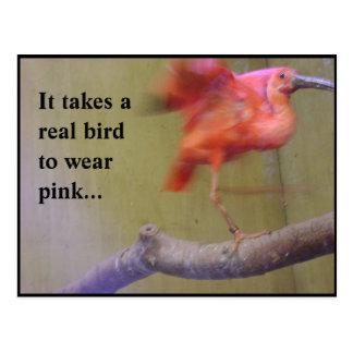 Ibis in Pink Postcard