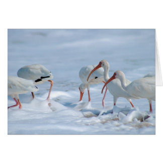 """Ibis in Snow"""" Greeting Card"""