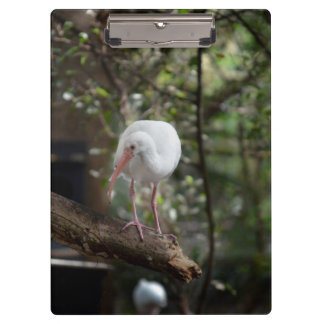 ibis on a branch green foliage behind clipboards