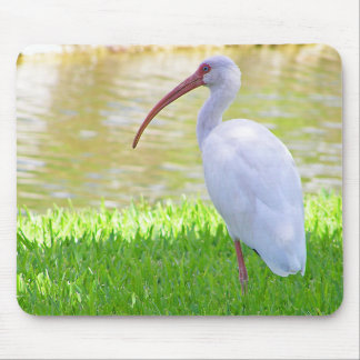 Ibis On One Leg Photograph Mouse Pad
