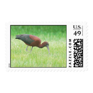Ibis Postage