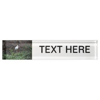 Ibis que se coloca en arbusto