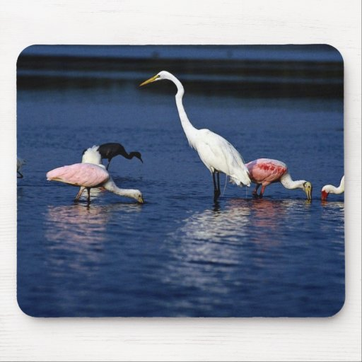 Ibis, spoonbills, great egret, blue heron and snow mouse pad