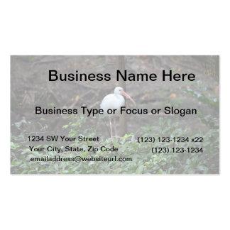 ibis standing on bush business card