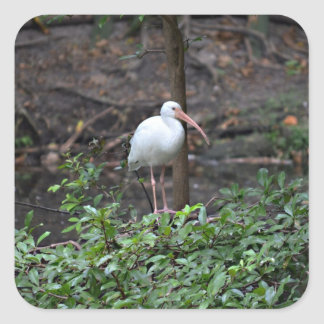ibis standing on bush square stickers