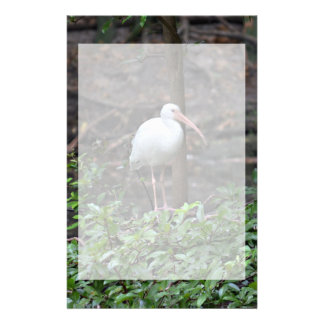 ibis standing on bush stationery