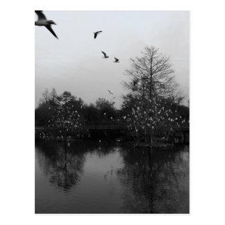 Ibis Trees Postcard