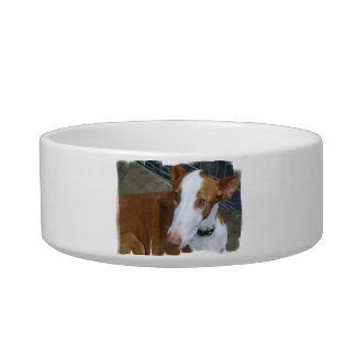 Ibizan Hound Pet Bowl