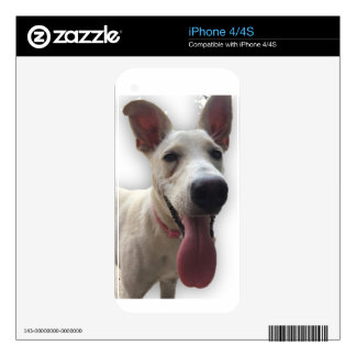 Ibizan Hound Skins For iPhone 4