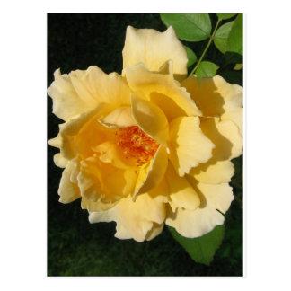 =IcaruS= Peachy Rose: Postcards