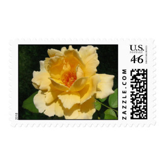 =IcaruS= Peachy Rose: Stamps