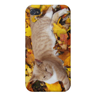 iCat case 4 Cover For iPhone 4