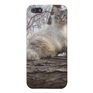 iCat case 7.5 iPhone 5 Cover