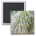 Ice Coated Pine Needles Magnet