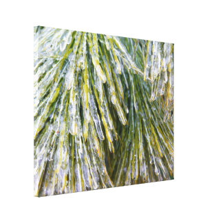 Ice Coated Pine Needles Winter Nature Photography Canvas Print