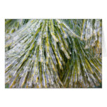 Ice-Coated Pine Needles Winter Nature Photography Card