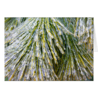 Ice Coated Pine Needles Winter Nature Photography Card