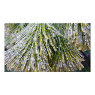 Ice-Coated Pine Needles Winter Nature Photography Poster