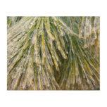 Ice-Coated Pine Needles Winter Nature Photography Wood Wall Decor