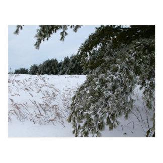 Ice Covered Landscape Postcard