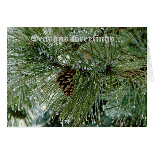 Ice Covered Pine Tree (Seasons Greetings) Card